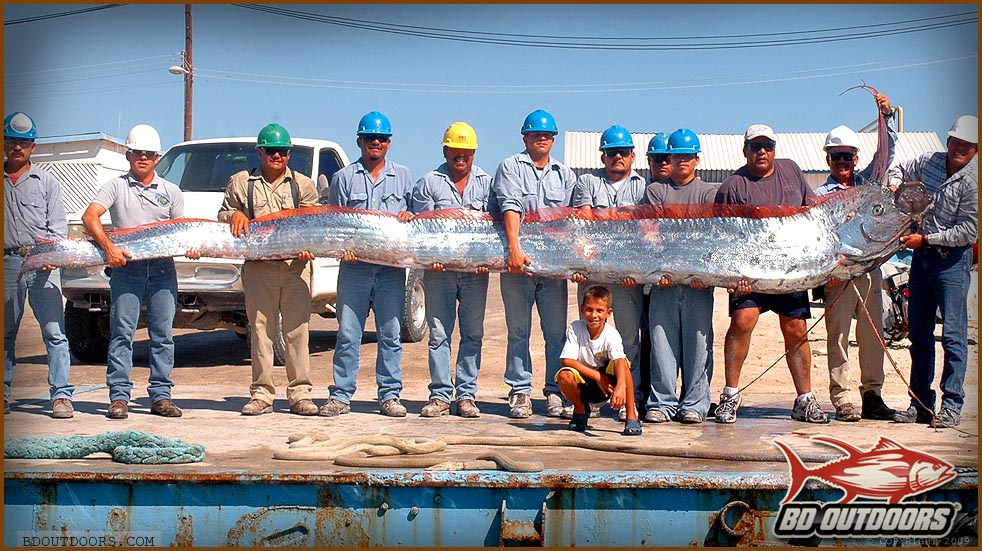 Mysterious 'horned' sea monster washes ashore in Spain, page 1 Oarfish 56 Ft
